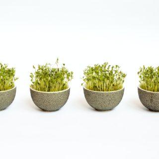 Мікрозелень: що це таке, користь та шкода мікрогріну